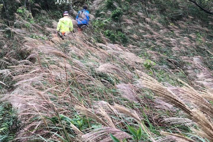 飛鵝山 處處有芒草走四峰登飛鵝山