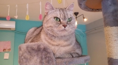 胖胖貓 Fattycats Cafe
