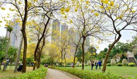 南昌公園.黃花海+綠草地